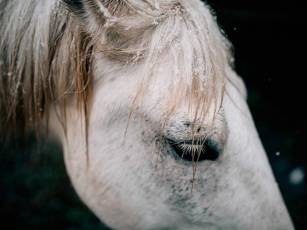 equine art shop - under winter skies