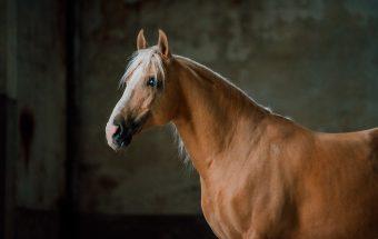 103-Equine_by_wengdahl_equine_photographer_hastfotograf_oland_kalmar