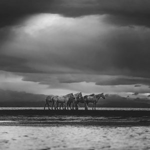 Camargue Sky Equine Art Photo Print