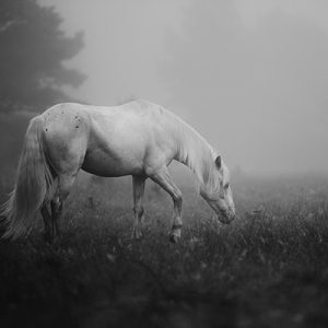 Misguided Ghosts Equine Art Photo Print