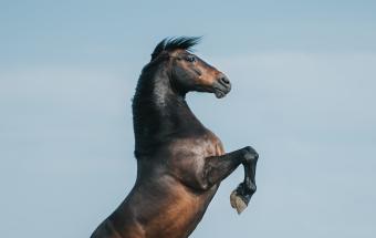 Equine by Wengdahl Hästfotograf Horse photographer Equine photographer Miron Bococi