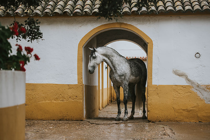 Spain Equine Art Photo Print
