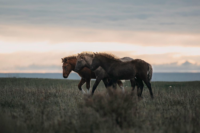 Equine by Wengdahl Hästfotograf Horse photographer Equine photographer