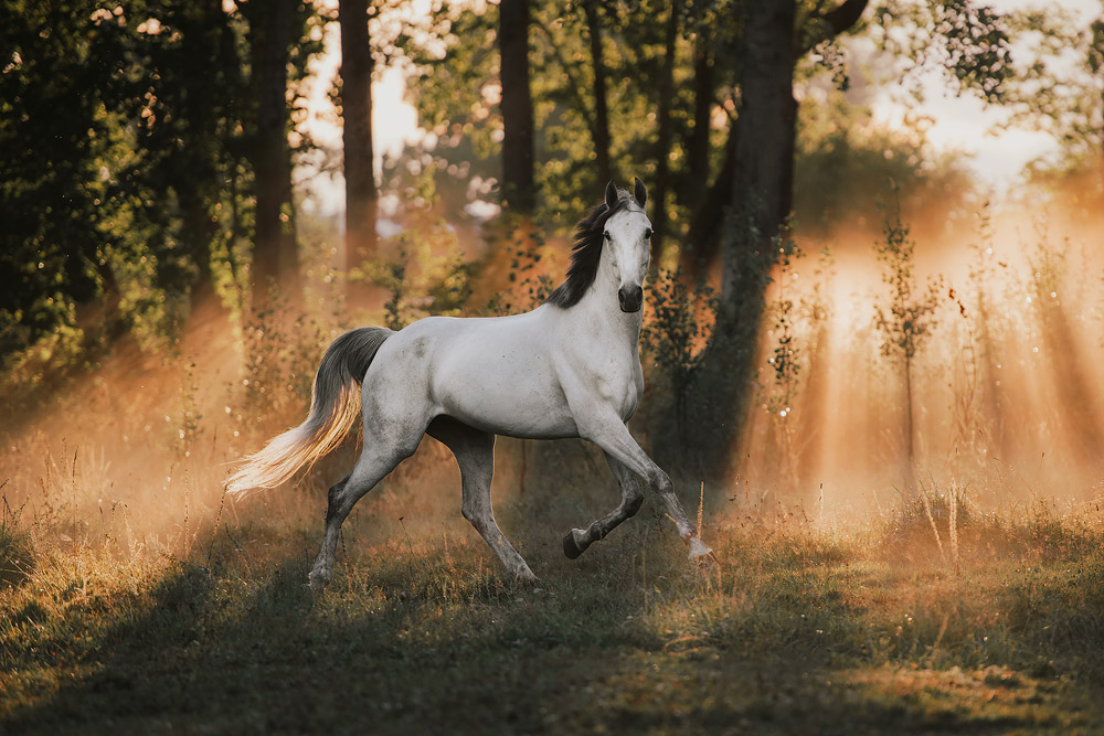 281-equine_by_wengdahl_equine_photography